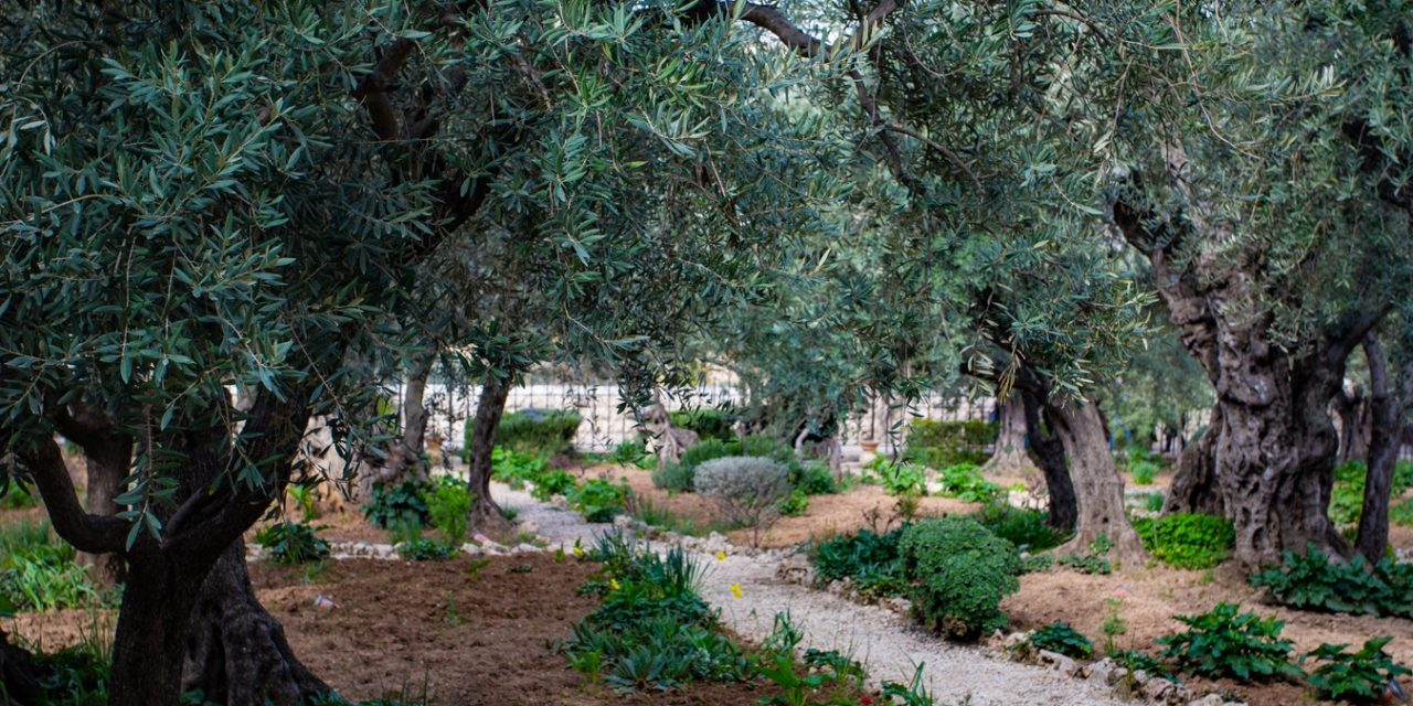 No Jardim das Oliveiras