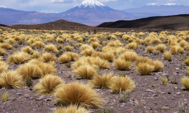 A santidade vista e vivida por Santa Teresa de Jesus dos Andes